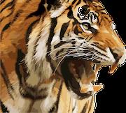 tiger-1880782_640