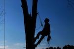 trees-service
